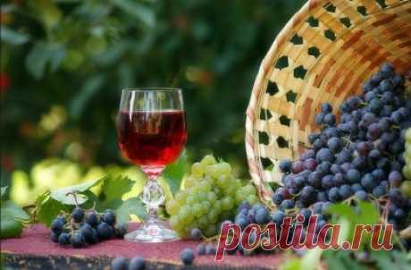 Вино из винограда в домашних условиях: 3 рецепта виноградного вина - универсальное, Изабелла, белое - Onwomen.ru