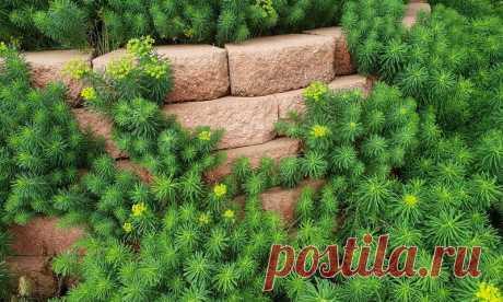 Избавиться от кротов помогут цветы на участке   Pentad