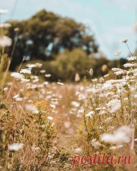 Осень щедра на простое счастье. Прохлада сентябрьского утра окутывает своей хрупкостью и звенящей тишиной - и уже хочется жить. Небо похоже на палитру сине - лазуревых красок, а лес на огненную. Природа пылает своей красотой и величественностью, в сентябре она еще шепчет, а в октябре уже начнет кричать о том, что все уходит в волшебный мирный сон до первого весеннего солнца. Воздух тихий, нетронутый, застывший - пахнет яблоками и последними полевыми цветами. Осень полна те...