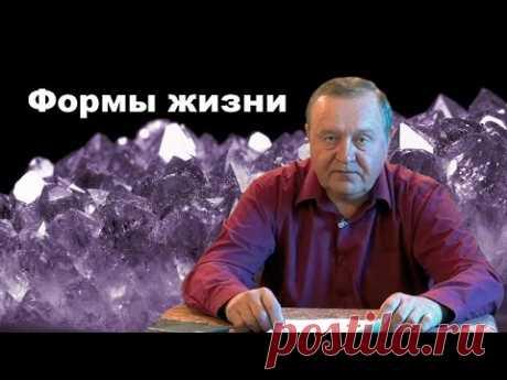2016-08-02 Формы жизни