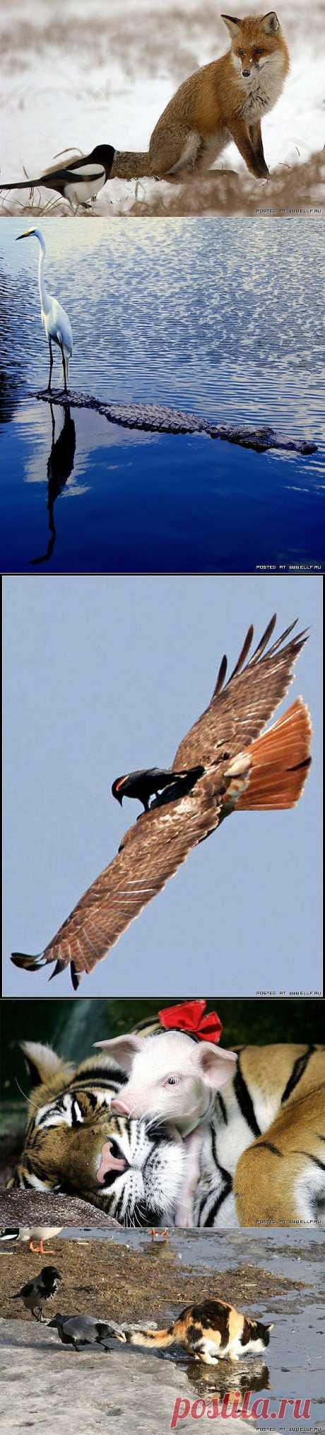 Необычный животный мир (12 фото)