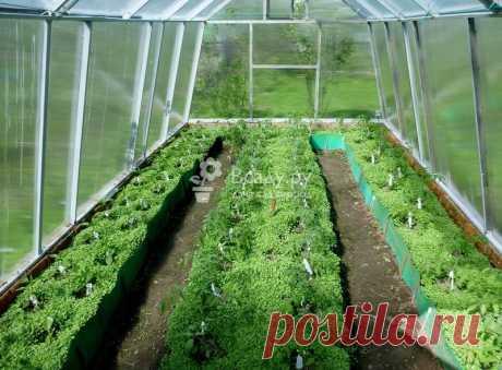 Устала почва в теплице - восстановление, подкормка Что делать, чтобы почва в теплице не уставала. Какая подкормка нужна для восстановления почвы. Что посадить, чтобы земля не уставала, уход за почвой