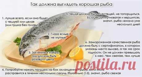 Памятка по выбору свежей рыбы — Делимся советами