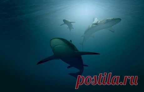 Есть ли акулы в Черном море: что надо знать планируя отпуск