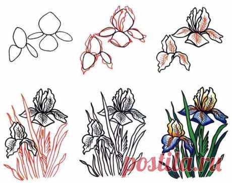 Рисуем цветы поэтапно. Как нарисовать цветок карандашом, фото-и видео-инструкции