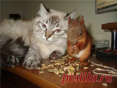 Заботливая мамаша (видео): кошка кормит бельчат - Братья наши меньшие - ГОРНИЦА - дайджест новостей, авторские блоги