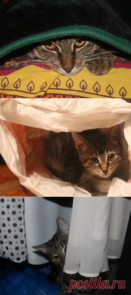 Котики любят прятаться, наш Шерхан тоже. Любимые места - пакеты, сумки, газеты. Любит рыть норки: просто зарывается под плед, покрывало, простынь. Наверное, там тепло, уютно и приятно котику. А нам забавно наблюдать за ним. А ваши котики любят прятаться? Расскажите о них.  Фото автора канала   Пушистые  новости от Шерхана   Яндекс Дзен