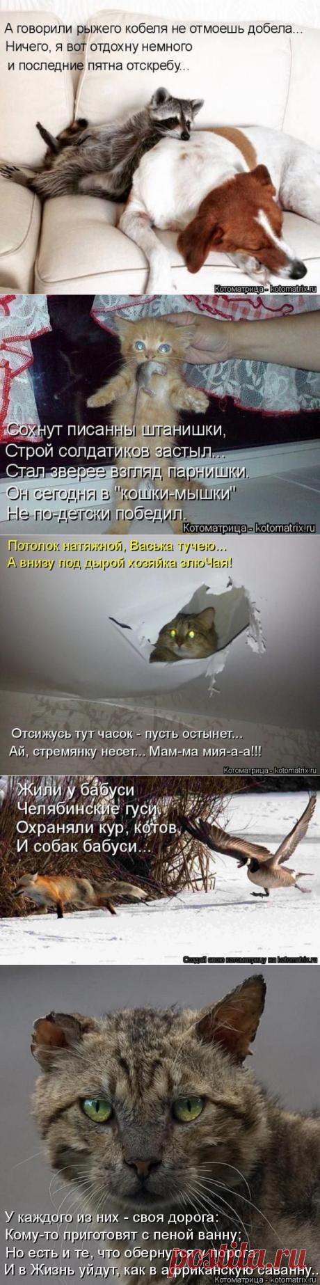 Лучшие котоматрицы прошедшей недели / Питомцы