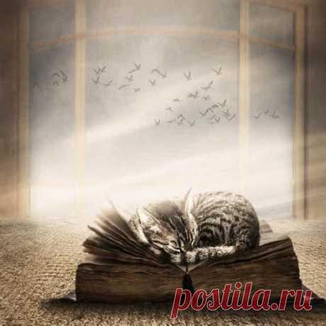 """""""Книги – только одно из вместилищ, где мы храним то, что боимся забыть. В них нет никакой тайны, никакого волшебства. Волшебство лишь в том, что они говорят, в том, как они сшивают лоскутки вселенной в единое целое.""""  Рэй Брэдбери"""