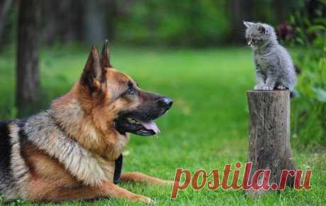 Кто умнее, кошки или собаки? - Нет скуки - Сайт хорошего настроения. Владельцы домашних животных наперебой пытаются доказать друг другу, что кошки умнее собак, и наоборот. На этот счет существует множество почти анекдотических историй. Однако мы имеем слишком мало обоснованных научных доказательств, ведь кошки не так охотно идут на контакт с человеком. Мы все же попытаемся разобраться в этом вопросе.