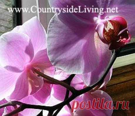 Фаленопсис: пересадка орхидеи фаленопсис в домашних условиях. Phalaenopsis