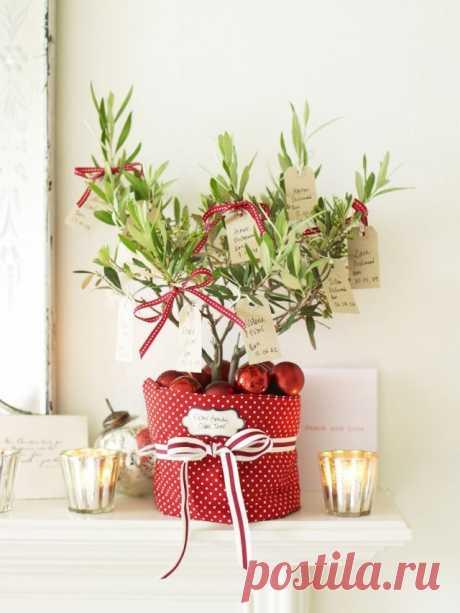 Комнатное растение в новогоднем кашпо.