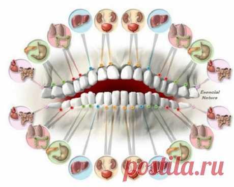 Читаем по зубам о болезнях… Доктора удивлены точностью этого метода! Как же работает этот метод и возможно ли прогнозировать недуги, просто посмотрев на зубы?