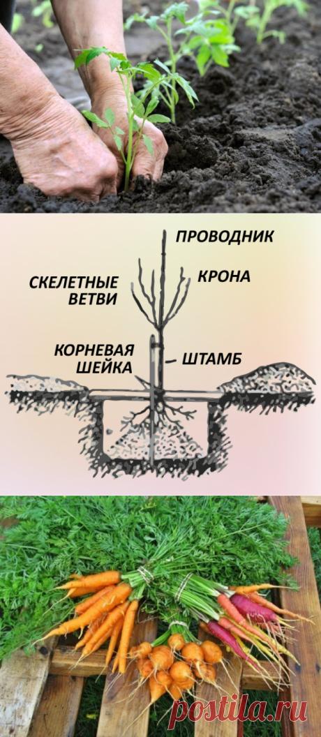 Дача | Надежда Худякова | Фотографии и советы опытных дачников на Постиле