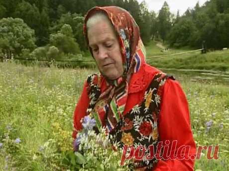 Монастырская травница: Не хотите болеть — накопайте себе три корня — лопуха, пырея и одуванчика — Сияние Жизни