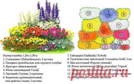 Клумба непрерывного цветения из многолетников: схемы, как сделать, фото