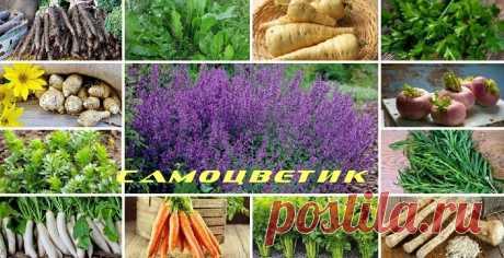 Какие овощи могут зимовать на грядке