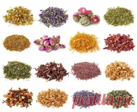 12 травяных чаев, которые подарят вам богатырское здоровье — Полезные советы