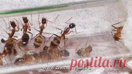 Как «вывести» муравьев. Народные советы