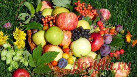 Осень зиму кормит: как собрать и сохранить урожай садово-огородных культур   FORUMHOUSE   Яндекс Дзен