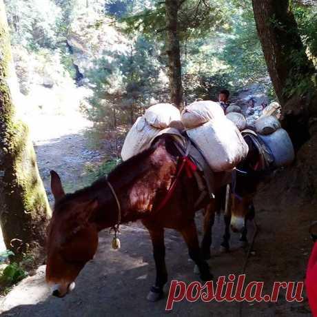 Караван. #горы,#караван,#непал,#гималаи,#треккинг,#путешествия.