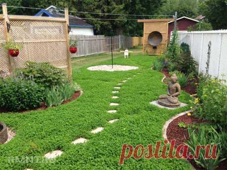 Как сделать сад и огород более продуктивными — Rmnt.ru