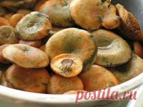 Соление грибов на зиму (рыжики и грузди)
