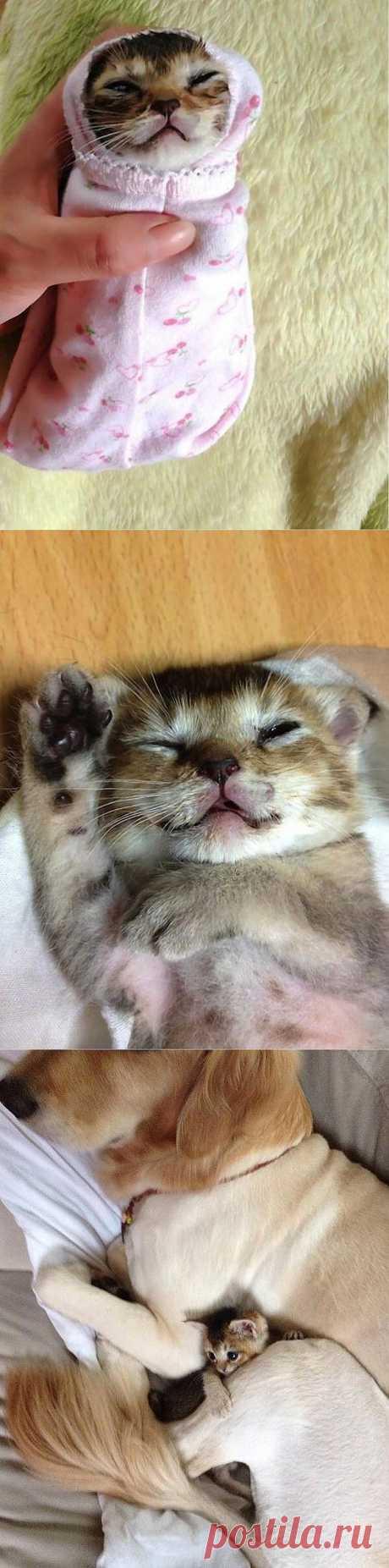 Трогательная история котенка по имени Васаби-чан : НОВОСТИ В ФОТОГРАФИЯХ