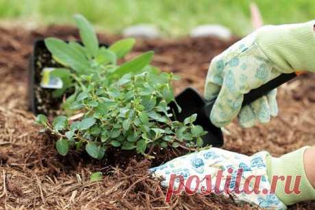 Как сохранить купленные растения до высадки | Самоцветик