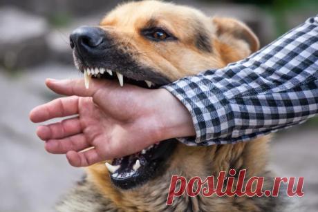Что делать, если напала агрессивная собака. Самооборона | ОБЕРОН-АЛЬФА: Оружие самообороны | Яндекс Дзен