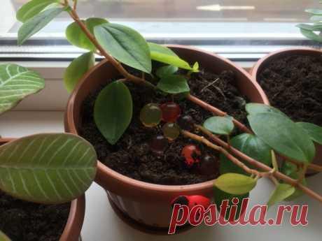 Как осуществить полив растений в свое отсутствие, чтобы ни у кого не просить помощи