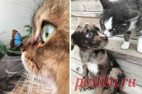 Милые фото, доказывающие, что мир абсолютно не заслуживает кошек