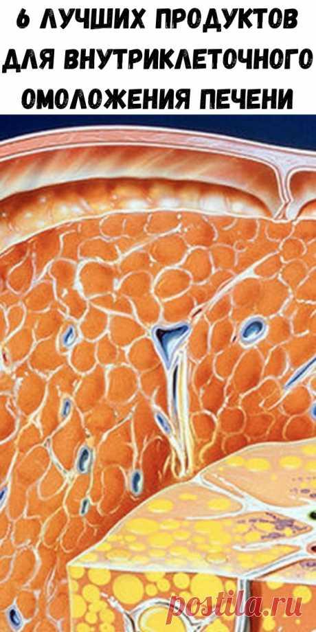 6 лучших продуктов для внутриклеточного омоложения печени - Стильные советы