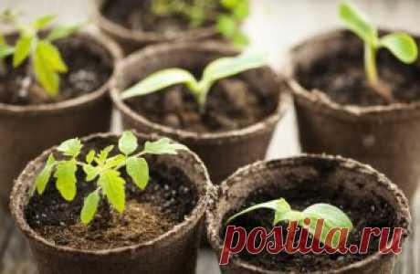 15 ошибок при выращивании рассады, которые мы допускаем чаще всего - МирТесен
