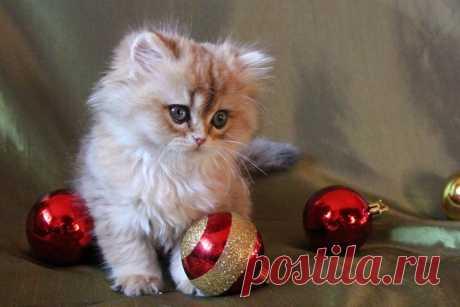 «милый котенок и новогодние игрушки » — карточка пользователя ionlights в Яндекс.Коллекциях