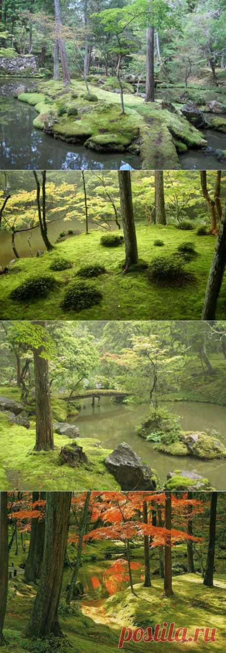 Сад мхов в Японии | ТУРИЗМ И ОТДЫХ