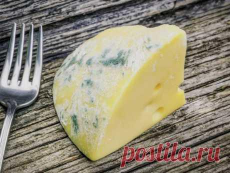 Что я делаю, чтобы сыр в холодильнике не плесневел. Моя маленькая хитрость