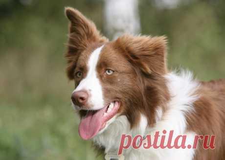 8 самых трудоёмких в уходе пород собак   PetTips