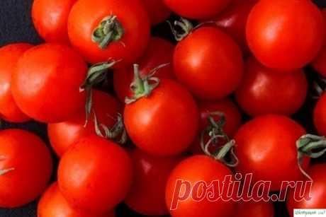 Самые легкие в выращивании сорта помидор — Садоводка