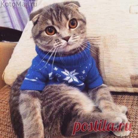 Модный свитерок