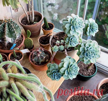 Суккуленты — широко распространенные и простые в уходе растения.