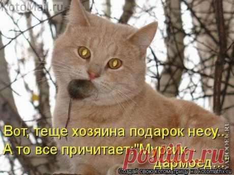 Подарок хозяйской тёще)))