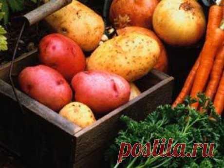 Диета картофельная