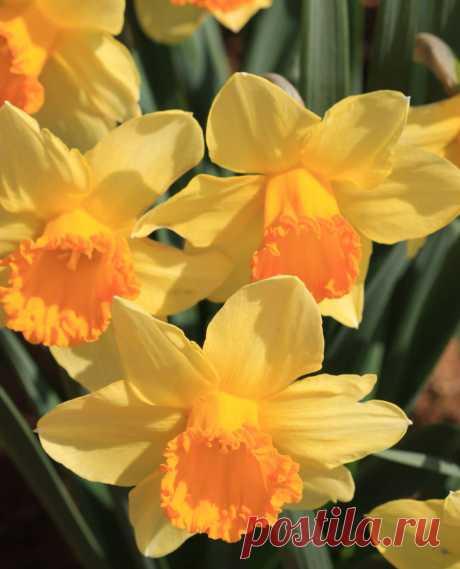 Так быстро пролетел проказник март, Что даже оглянуться не успели… Не так давно весна пришла на старт, И уж апрель выводит акварели…  Искрится небо сочной синевой, Блестит лучами радужного солнца… Земля зелёной стелется травой И светом наполняется… до донца…  Всё громче птичьих песен льётся трель, Лишь на ночь потихоньку умолкая… Вовсю цветёт красой, звенит апрель — Предвестник нежно-ласкового мая…  Thank you for the cold