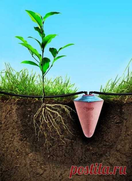 Не поливать растения в течение месяца возможно благодаря древнеегипетской керамике - Каменское (Днепродзержинск)