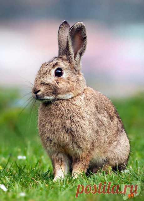 Самые большие виды зайцев в мире: их фото и описание