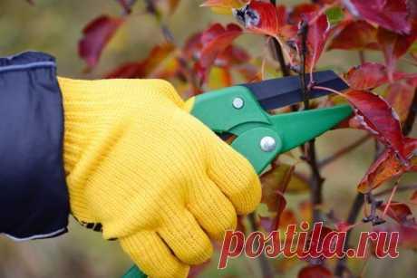 7 вещей, которые вы должны сделать с растениями до наступления мороза | Почва и плодородие (Огород.ru)