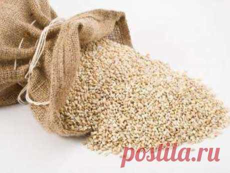 Ячменная крупа - полезные свойства; фото рецепты блюд с ней