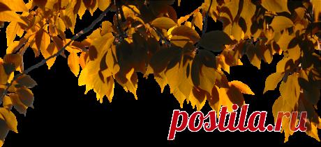 Яндекс.Фотки Альбомы. Осень