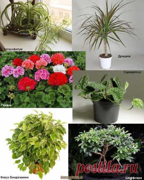 Комнатные растения: что нужно для очистки воздуха в доме и в квартире :: социальная сеть родителей https://forumroditeley.ru/viewtopic.php?t=7982